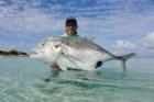 Farquhar Atoll - Seychelleswww.flycastaway.cominfo@flycastaway.com